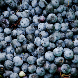 ANDEAN BLUEBERRIES